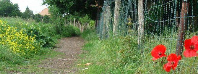 Les sentiers de Haren… (la suite le 28/06)